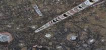 Fossil Brown Treppen Preise