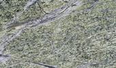 Rainforest Green Treppen Preise
