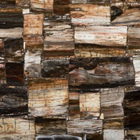 Caesarstone Concetto - 8331 Petrified Wood Classic