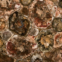 Caesarstone Concetto - 8330 Petrified Wood
