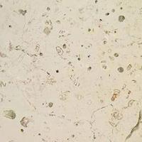 Marmor - Trani Perlatino