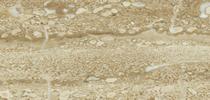 Marmor  Preise - Daino Reale  Preise