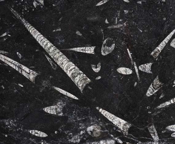 Fossil Black - Treppenanlagen zum Pauschalpreis