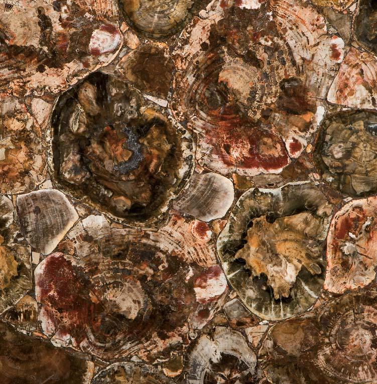 8330 Petrified Wood - Treppenanlagen zum Pauschalpreis