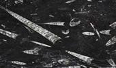Marmor Preise - Fossil Black Fensterbänke Preise