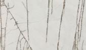Fensterbänke Preise - Golden Radix Fensterbänke Preise